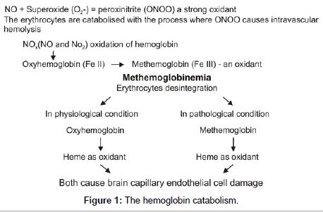 environmental-analytical-chemistry-hemoglobin-catabolism