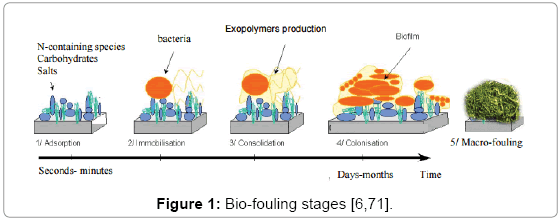 environmental-analytical-toxicology-Bio-fouling-stages