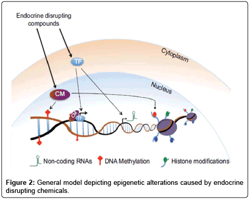 environmental-analytical-toxicology-depicting-epigenetic-endocrine