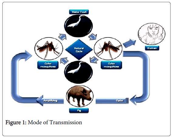 epidemiology-Mode-Transmission