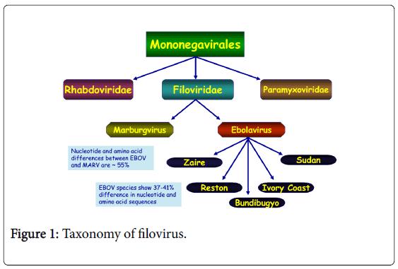 epidemiology-Taxonomy-filovirus