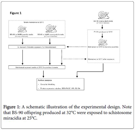 epidemiology-schematic-illustration