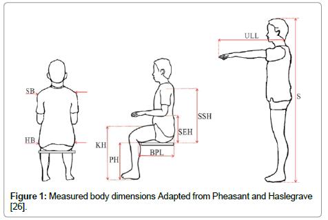 Ergonomics Measured Body Dimensions