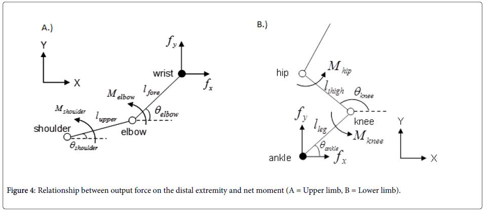 ergonomics-distal-extremity