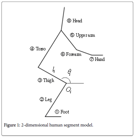 ergonomics-human-segment-model