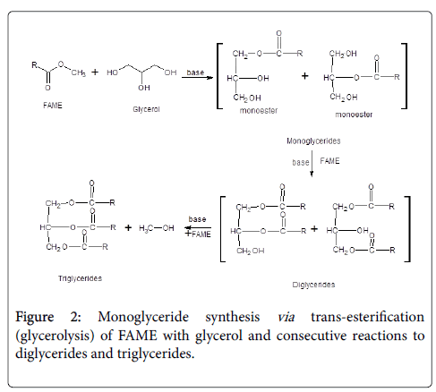 experimental-food-chemistry-Monoglyceride-synthesis