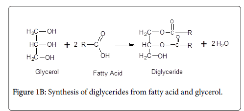 experimental-food-chemistry-Synthesis-diglycerides