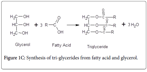 experimental-food-chemistry-Synthesis-tri-glycerides