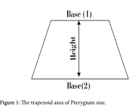 experimental-ophthalmology-trapezoid-area-Pterygium-size