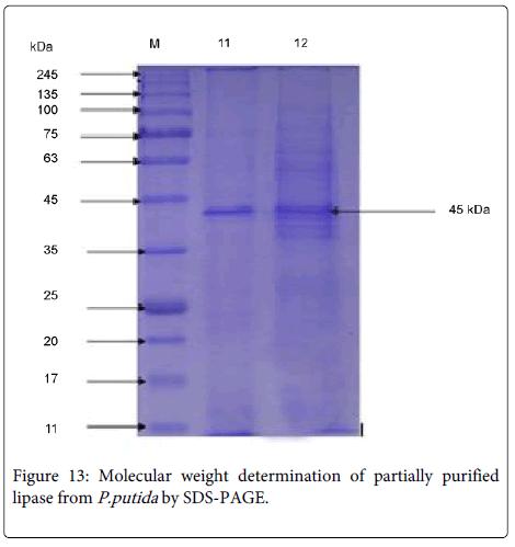 fermentation-technology-Molecular-weight
