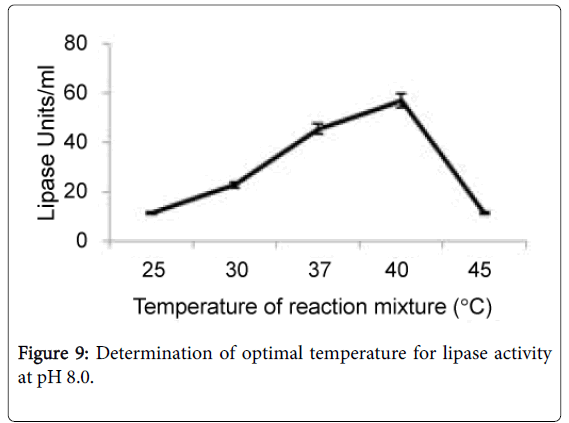 what temperature does lipase work best at