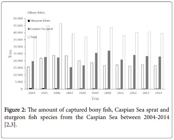 fisheries-and-aquaculture-Caspian-Sea-sprat