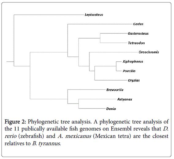fisheries-and-aquaculture-genomes-Ensembl-reveals