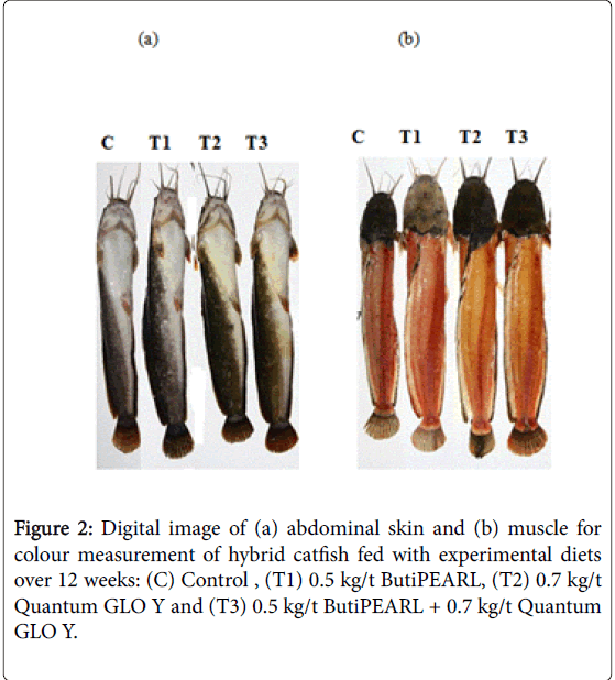fisheries-and-aquaculture-journal-abdominal-skin