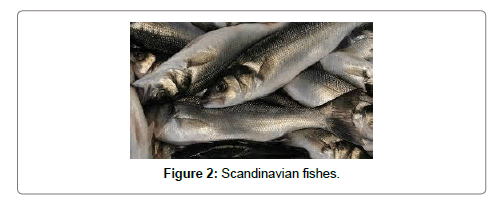 fisheries-livestock-production-fishes
