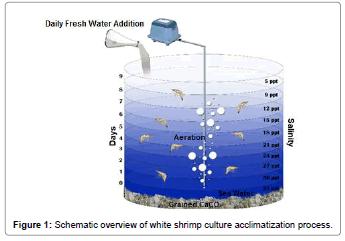 fisheries-livestock-production-shrimp-culture