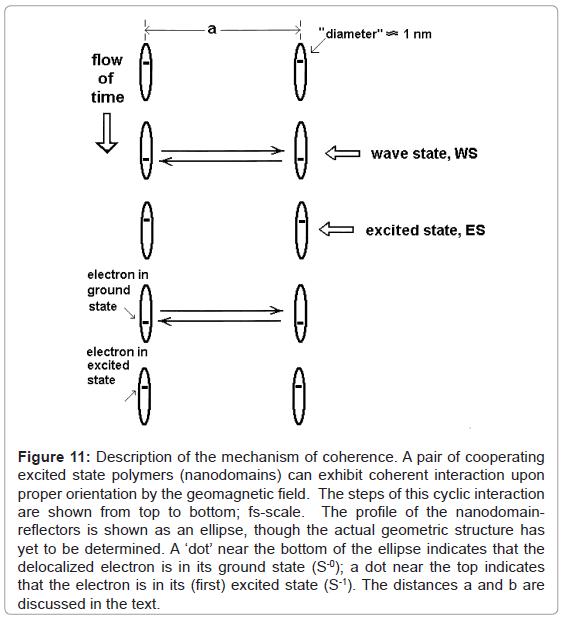 fluid-mechanics-description-mechanism-coherence