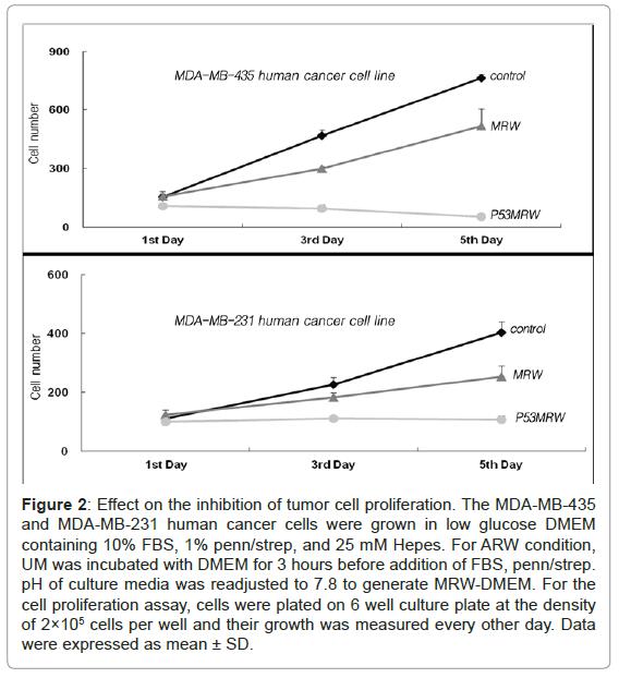 fluid-mechanics-effect-inhibition-tumor-proliferation