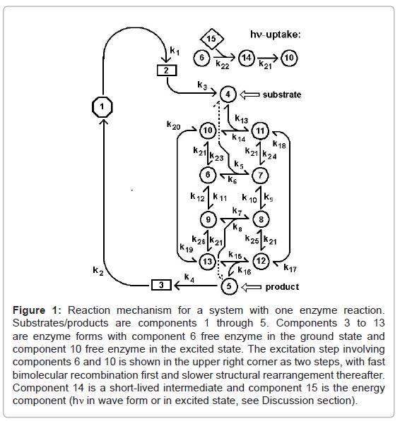 fluid-mechanics-reaction-mechanism-enzyme
