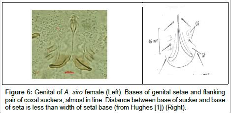 food-processing-technology-Bases-genital-setae