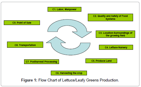 food-processing-technology-Leafy-Greens