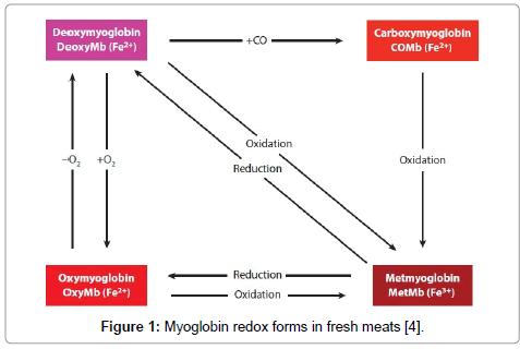 food-processing-technology-Myoglobin-redox