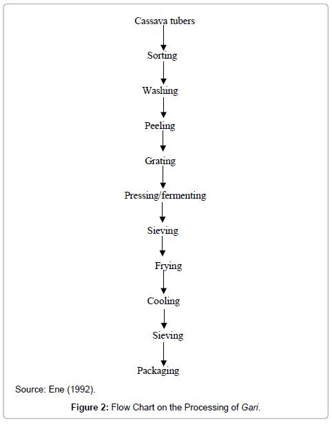 food-processing-technology-Processing-Gari