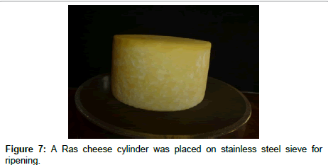 food-processing-technology-cheese-cylinder