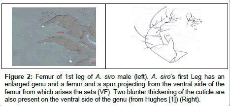 food-processing-technology-enlarged-genu-femur