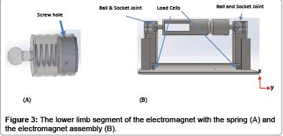 forensic-biomechanics-lower-limb