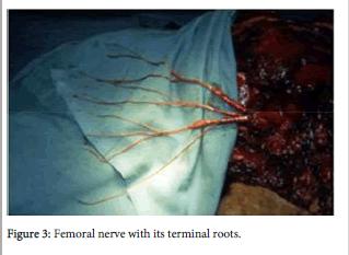 forensic-biomechanics-terminal-roots