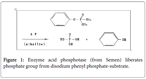 forensic-research-Enzyme-acid-phosphotase