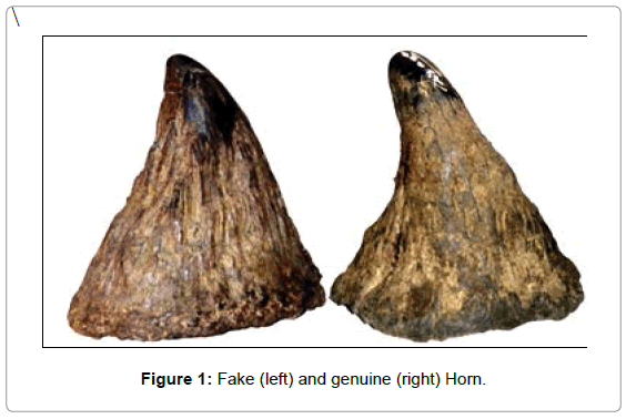 forensic-research-Fake-genuine-Horn