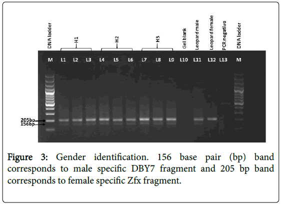 forensic-research-Gender-identification