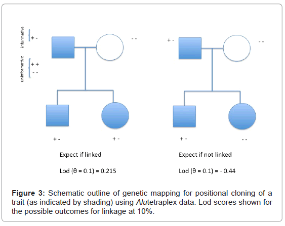 forensic-research-Schematic-outline