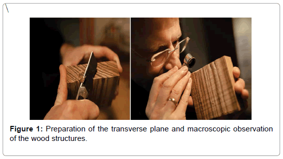 forensic-research-macroscopic-observation