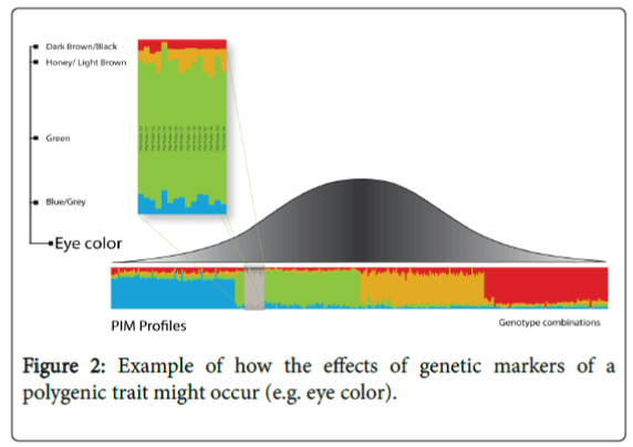forensic-research-polygenic-trait-might