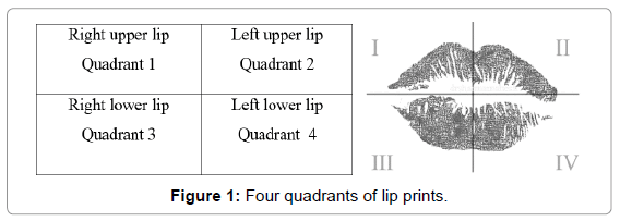 forensic-research-quadrants-lip-prints