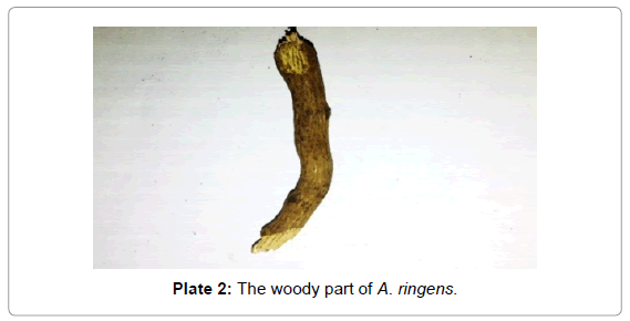 forensic-research-woody-part-A-ringens