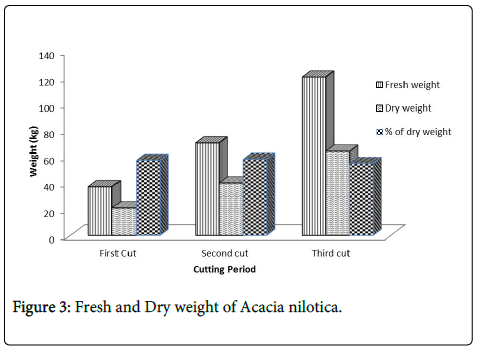 forest-research-Fresh-Acacia-nilotica