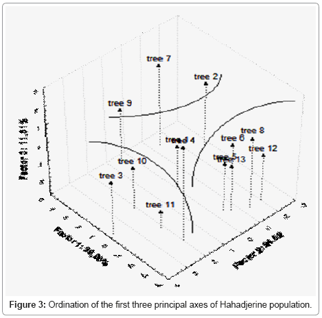 Essential Oil Variability In Natural Hahadjerine Population Of