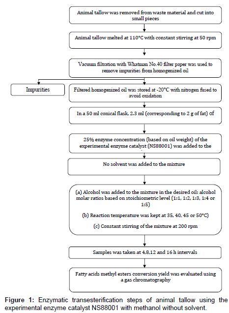 fundamentals-renewable-energy-Enzymatic-transesterification