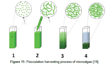 fundamentals-renewable-energy-Flocculation