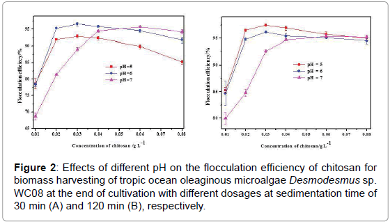 fundamentals-renewable-energy-applications-flocculation-efficiency