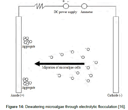 fundamentals-renewable-energy-microalgae