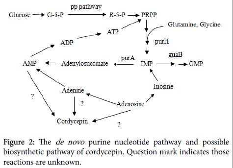 fungal-genomics-biology-nucleotide-pathway