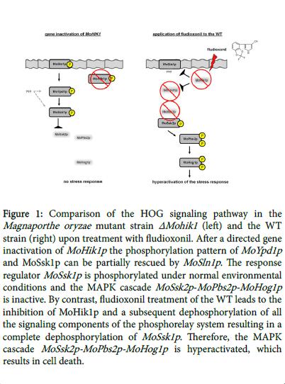 fungal-genomics-signaling-pathway