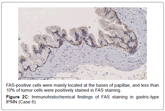 gastrointestinal-digestive-stained-FAS-staining