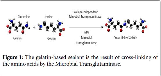 gastrointestinal-digestive-system-gelatin-based