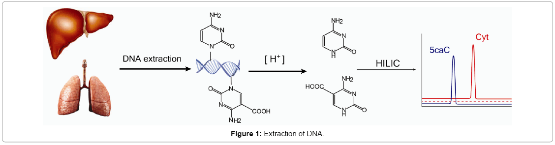 gene-technology-Extraction-DNA